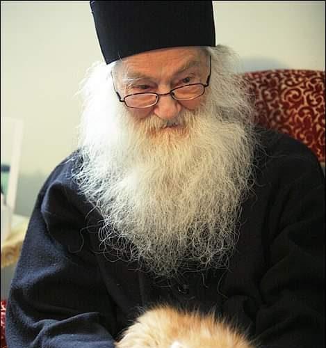 preot-pisica