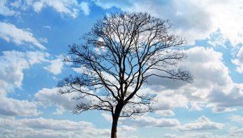 tree164
